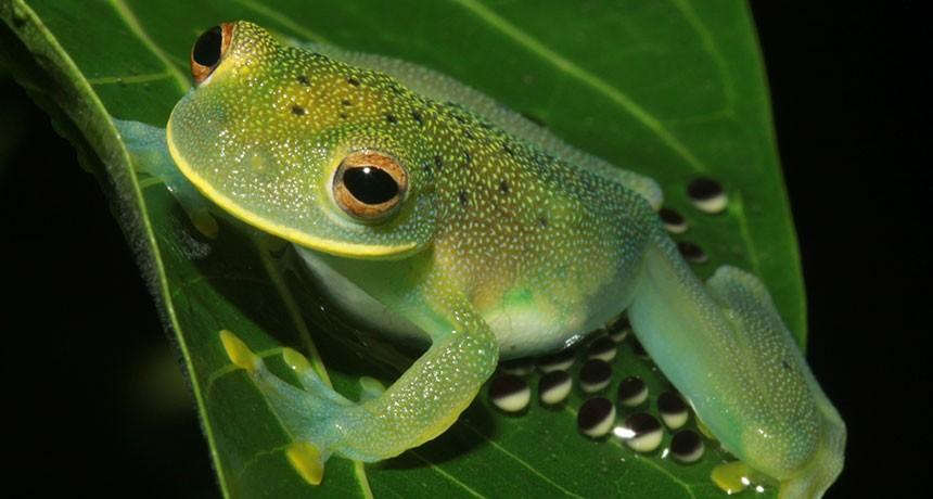 033017_sm_glass-frog_main_free